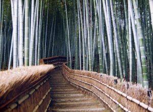 bamboo_stairs_sagano_kyoto_pref_japan_photo_akira_okada_jnto